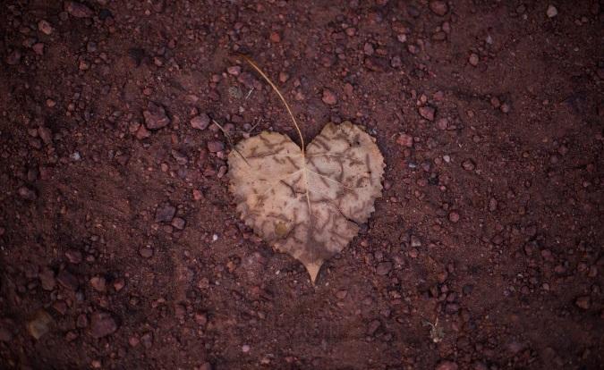 ハート型の葉っぱ一枚が落ちている地面