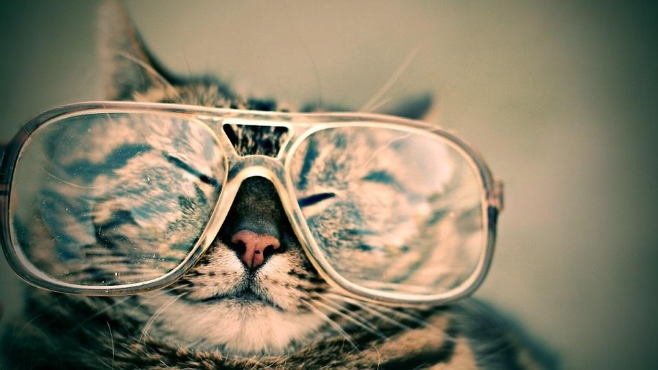メガネをかけたねこ